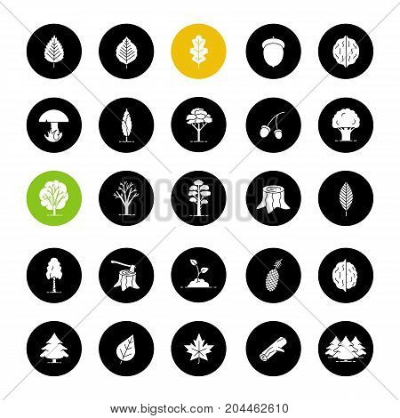Tree types glyph icons set. Forest, park. Vector white silhouettes illustrations in black circles. Forestry