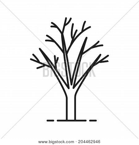 Tree without leaves linear icon. Thin line illustration. Autumn tree contour symbol. Vector isolated outline drawing