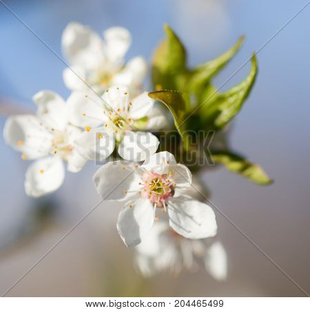 beautiful flowers on the branches of a tree