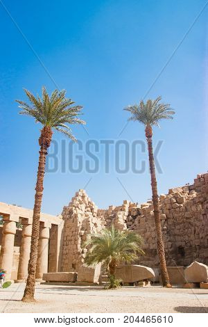 Palms near the temple in Luxor, Egypt
