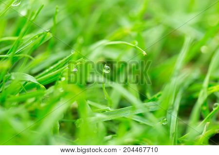 drops of dew on the grass. macro