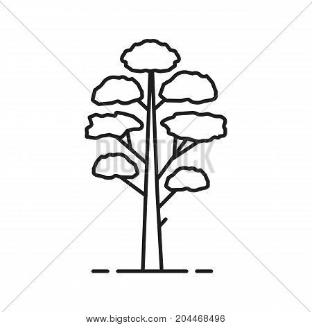Pine tree linear icon. Thin line illustration. Contour symbol. Vector isolated outline drawing