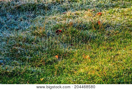 Fallen Leaves On A Frosted Grass