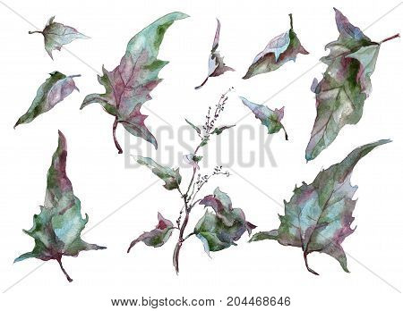 Set Of Autumn leaves wormwood silver tarragon