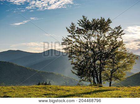 Few Trees On Edge Of A Hillside In Evening Light