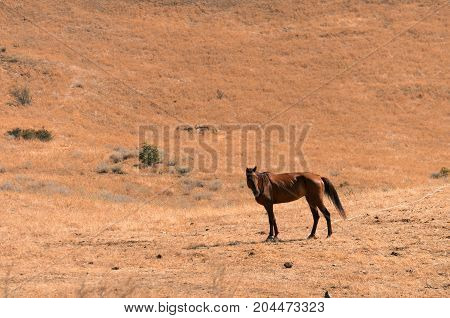 a lonely horse in a deserted locality