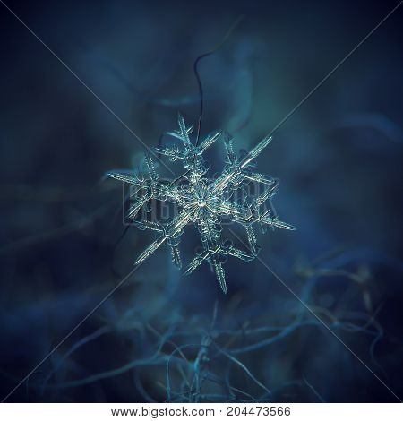 Real snowflake at high magnification. Macro photo of small stellar dendrite snow crystal with six thin, sharp arms and elegant shape. Snowflake glittering on dark blue background in cold light.