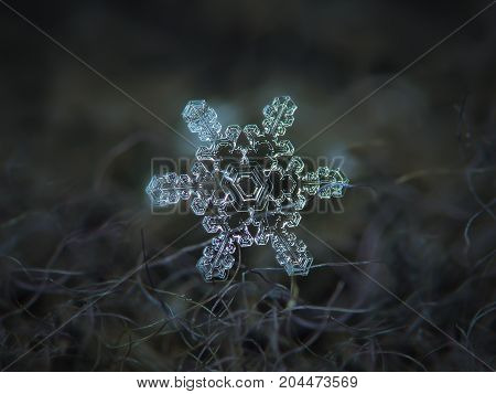 Real snowflake at high magnification. Macro photo of stellar dendrite snow crystal with beautiful inner pattern and unusual, asymmetrical central hexagon. Snowflake glowing on dark gray background.