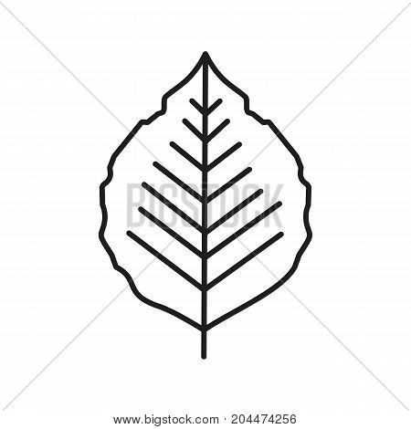 Poplar leaf linear icon. Thin line illustration. Forest tree leaf contour symbol. Vector isolated outline drawing