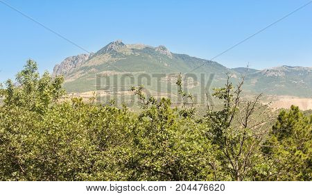 The top of the mountain behind the trees. Mountain landscape on a clear sunny day.