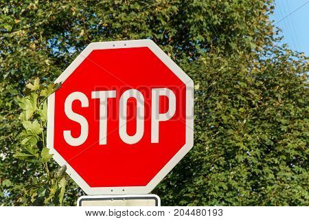 Stop Sign In The Street In Front Of Trees