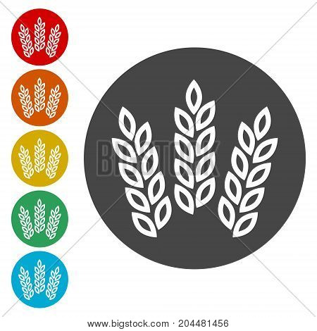Wheat ears or rice icon, simple vector icon