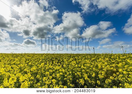 Wind Turbines For Electricity Generation In Yellow Rapeseed Field In Normandy, France. Country Agric