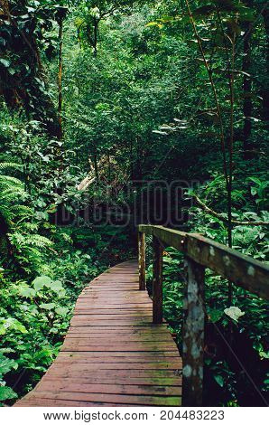 Wooden plank bridge observatory of forest in rain forest of Borneo Malaysia