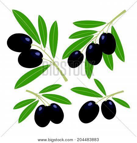 Olives. Set of dark olives with green leaves. Vector illustration.