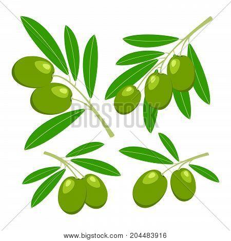 Olives. Set of green olives with green leaves. Vector illustration.