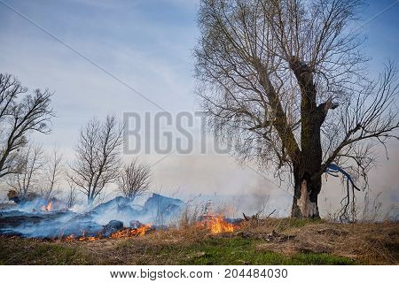 Burned grass and trees on the meadow in springtime.