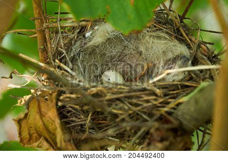 Bird Nest With One Egg In The Bush