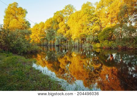Autumn landscape. River and yellowed autumn trees along the autumn forest river at the sunset.Colorful autumn forest nature. Autumn sunny landscape. Golden autumn trees near the river