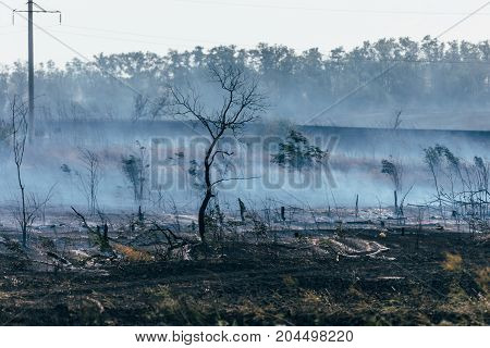 Burnt field, smoke after a fire, burnt trees, natural disaster