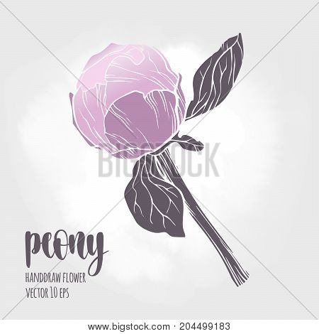 Floral plant botany element. Colorful illustration on light background for your design. poster