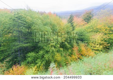 Motion blur of foliage on windy New Hampshire mountainside