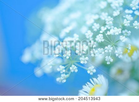 Beautiful blurred white flowers against the light blue background (very shallow DOF selective focus) copyspace on the left
