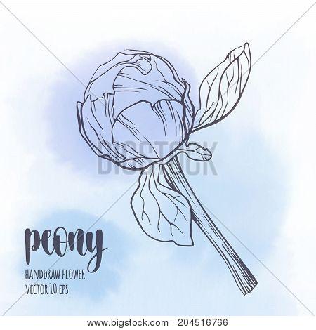 Floral plant botany element. Contour illustration on watercolor spot background for your design.