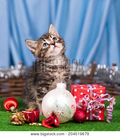 Cute little kitten with Christmas gifts over blue background