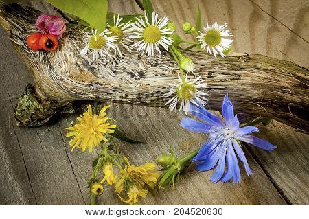 Last summer the wild flowers on wooden background.