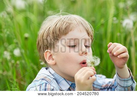 Young Blond Boy In Meadow Blowing On Dandelion Seeds