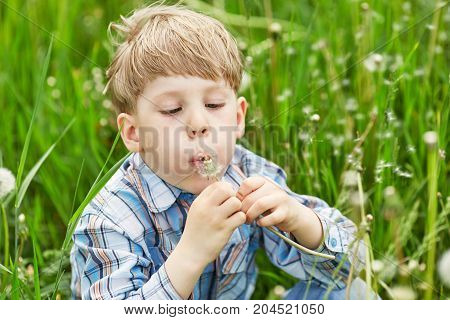 Young Blond Boy In A Meadow Blowing On Dandelion Seeds