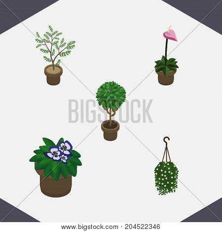 Isometric Houseplant Set Of Fern, Grower, Tree And Other Vector Objects