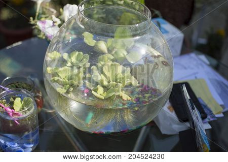 Aquatic plants grown in jar filled with water.