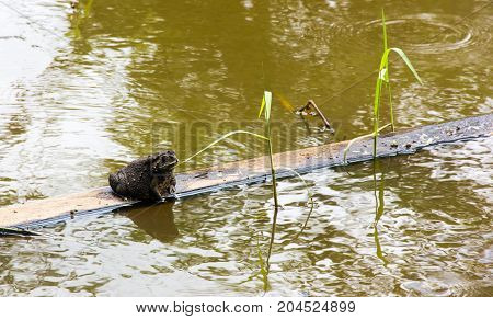 toad sitting on timber float in water