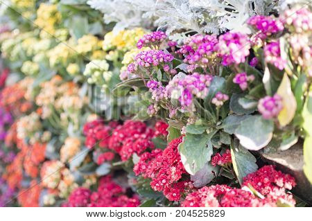 Mixed vibrant flowers of various colors and types.