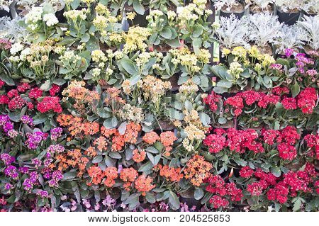 Variety of flowers and mixed with others