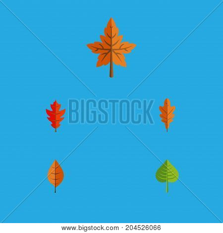 Flat Icon Leaves Set Of Hickory, Foliage, Linden And Other Vector Objects