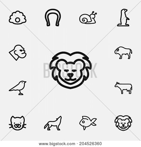 Set Of 12 Editable Zoology Outline Icons. Includes Symbols Such As Horseshoe, Wolf, Gopher And More