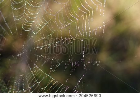 Spider Web With Colorful Background, Nature Series