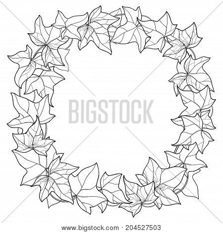 Vector wreath with outline Ivy or Hedera foliage. Ornate leaf and Ivy vine in black isolated on white background. Perennial climbing plant in contour style for summer design and coloring book.