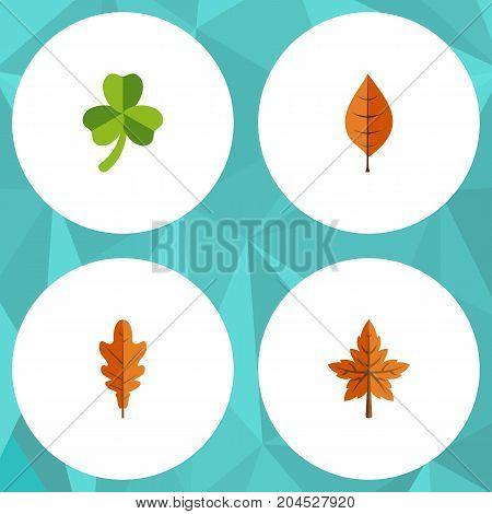 Flat Icon Leaf Set Of Linden, Alder, Leaf And Other Vector Objects