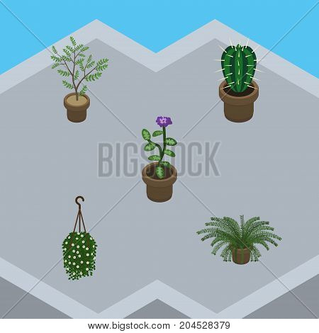 Isometric Flower Set Of Peyote, Flower, Plant And Other Vector Objects