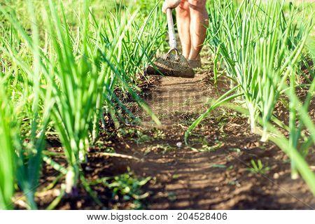 Man On A Garden Path Gardening Dirt With A Hoe