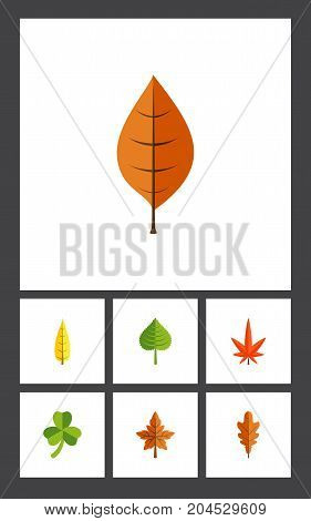 Flat Icon Foliage Set Of Aspen, Leaf, Hickory And Other Vector Objects