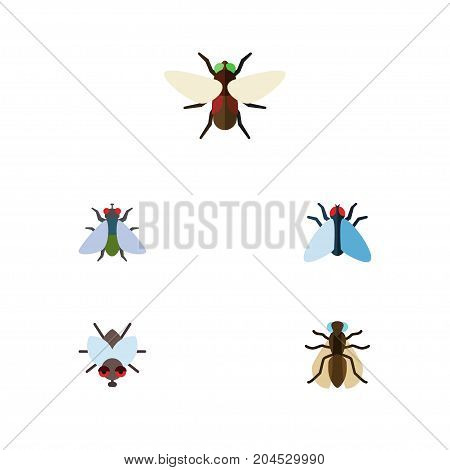 Flat Icon Housefly Set Of Mosquito, Buzz, Fly And Other Vector Objects