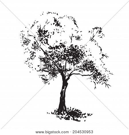 Hand-drawn aple tree. Black and white realistic image, sketch painted with ink brush.. Vector illustration
