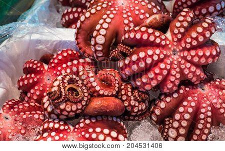 Red live octopus at Tsukiji fish market Tokyo Japan