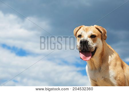 Adorable big dog looking away with mouth opened cloudy sky background.