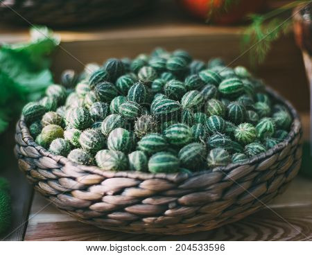 Wattled basket with heap of ripe Cucumis myriocarpus: green and spiny vegetable also called gooseberry cucumber or gooseberry gourd or paddy melon; shallow depth of field